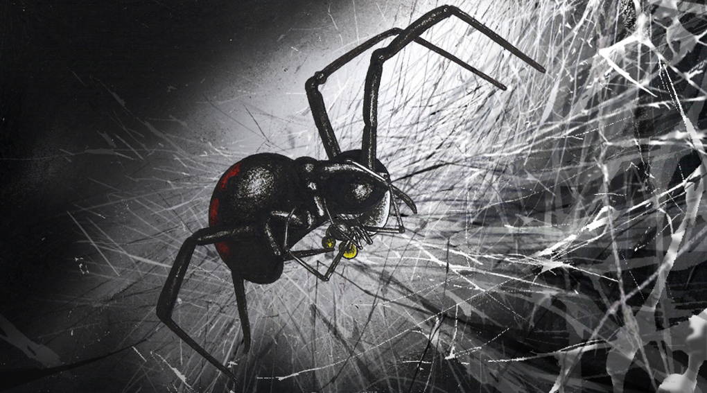 Spider-Close-Up